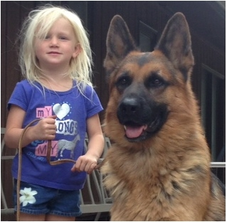 German Shepherd Breeders in Montana Omega Shepherds